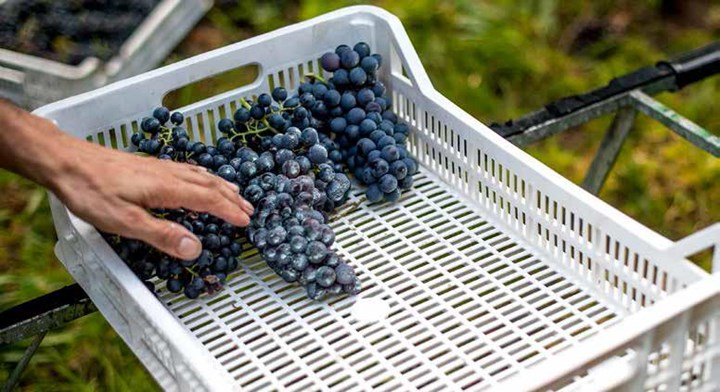 Moestue Grape Selection; En garanti for kvalitet